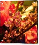 Flower Stem Acrylic Print