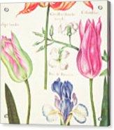 Flower Studies  Tulips And Blue Iris  Acrylic Print