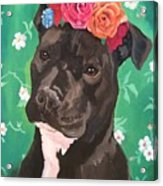 Flower The Pitbull Acrylic Print