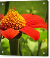 Flower Tower Platform Acrylic Print