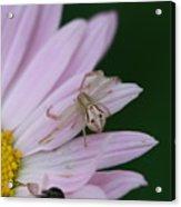 Flower Trap Acrylic Print