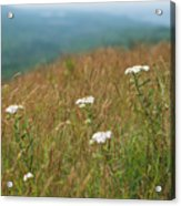 Flower View Of Mountains Acrylic Print