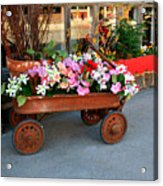 Flower Wagon Acrylic Print by Perry Webster
