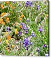 Flower Whispers Acrylic Print