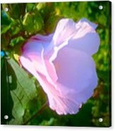 Flower With Painted Look Acrylic Print