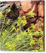 Flower Wood And Rock Acrylic Print