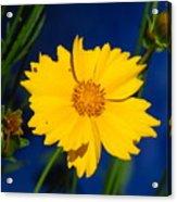 Flower Yellow Acrylic Print