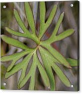 Flowerantlers Acrylic Print