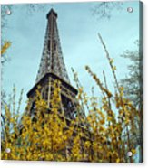 Flowered Eiffel Tower Acrylic Print