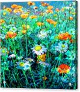 Flowerfield Acrylic Print