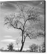 Trees Are Talking To Us Acrylic Print