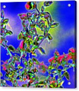 Flowering Brittle Bush In An Altered State Acrylic Print