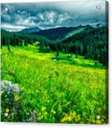 Flowering Colorado Mountain Meadow Acrylic Print