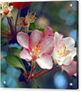 Flowering Crab Acrylic Print by Jame Hayes