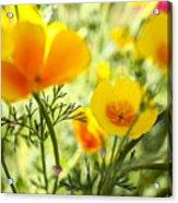Flowering Garden Acrylic Print