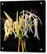 Flowering In Florida Acrylic Print