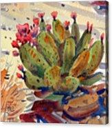 Flowering Opuntia Acrylic Print