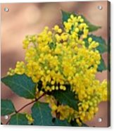 Flowering Plant 032514a Acrylic Print