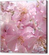 Flowering Tree Art Prints Spring Pink Blossom Flowers Baslee Acrylic Print