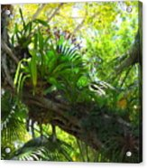 Flowering Twisted Roots Acrylic Print