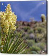 Flowering Yucca Acrylic Print