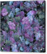 Flowers #061 Acrylic Print