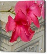 Flowers 115 Acrylic Print