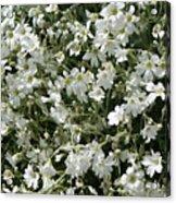 Flowers 16 Acrylic Print