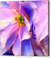 Flowers 31 Acrylic Print