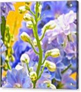 Flowers 39 Acrylic Print