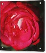 Flowers 4 Acrylic Print
