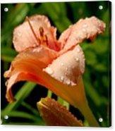 Flowers 52 Acrylic Print