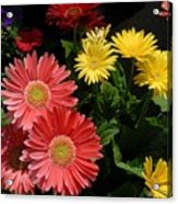 Flowers 728 Acrylic Print