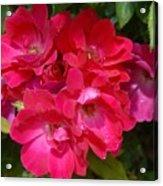 Flowers 732 Acrylic Print