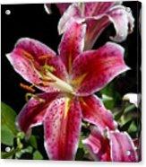 Flowers 733 Acrylic Print