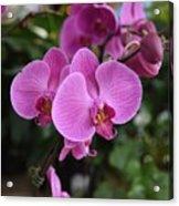 Flowers 820 Acrylic Print