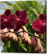 Flowers 823 Acrylic Print