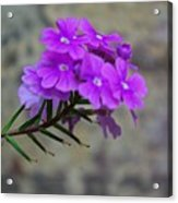 Flowers Against The Wall Acrylic Print