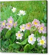 Flowers Along The Edge 1006 Acrylic Print