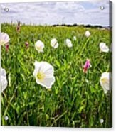 Flowers And Landscapes Along Texas Highway Roadside In Spring Acrylic Print
