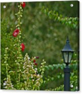 Flowers And Lanterns Acrylic Print