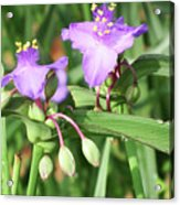 Flowers And Raindrops Acrylic Print