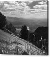 Flowers At Table Rock Overlook In Black And White Two Acrylic Print