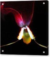 Flower's Aura Acrylic Print