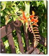 Flowers' Bench Acrylic Print
