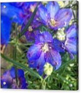 Flowers Blooming Acrylic Print