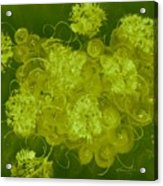Flowers, Buttons And Ribbons -shades Of Chartreuse Acrylic Print