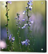 Flowers By The Pond Acrylic Print