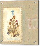 Flowers From Bethlehem  Acrylic Print