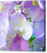Flowers Hydrangeas Art Prints Floral Garden Baslee Troutman Acrylic Print